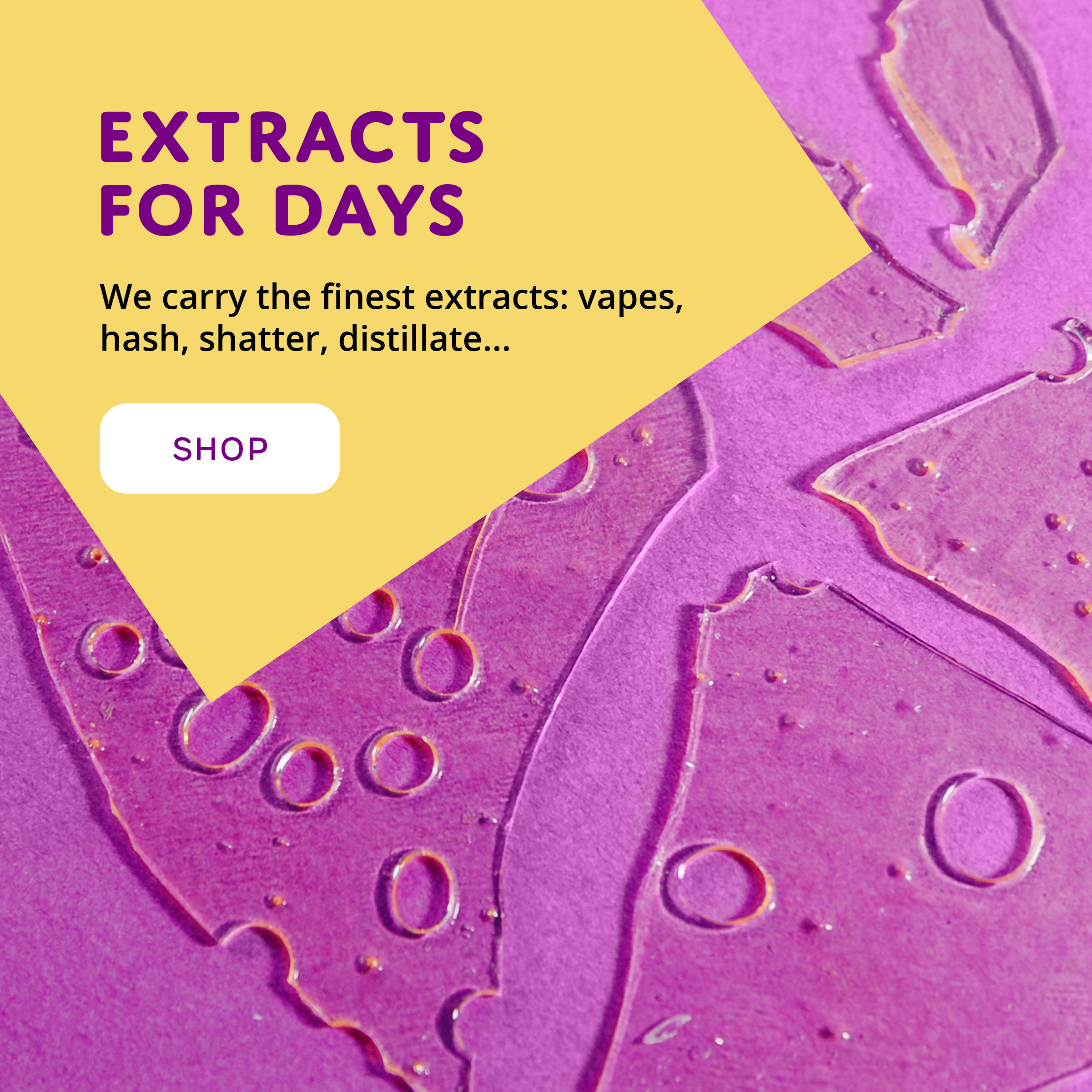 Buddalicious_extracts-shatter-hash-budder-vape-tincture-concentrates